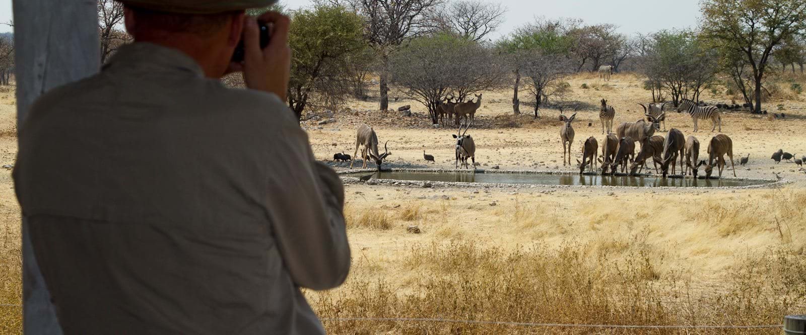 Namibia, Safari, Wildlife